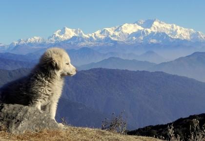 one day trek tumling darjeeling Kanchenjunga trek